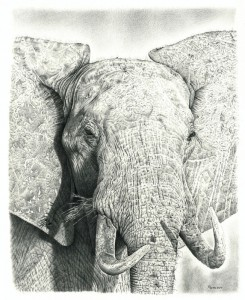 Drawing of Elephant, by Remrov